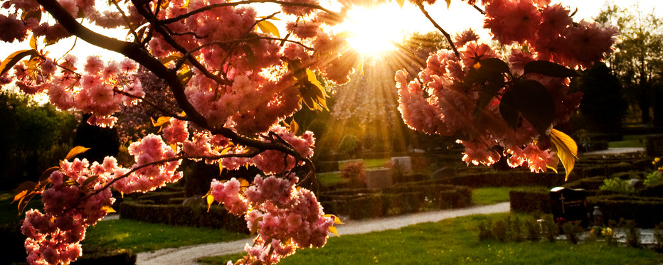 Træ og solskin på kirkegård