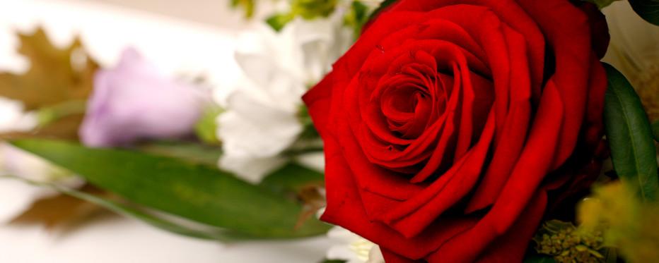 Buket af roser på kiste