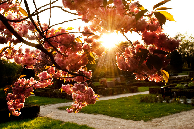 Sol på kirkegård