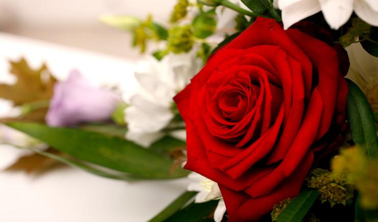 Rose på kiste
