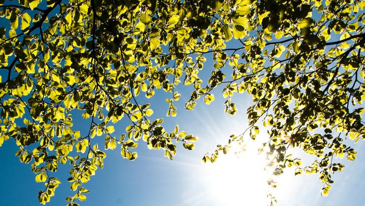 Himmel set gennem grønne blade