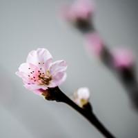 Blomst, gren