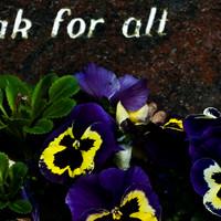 kirkegård9